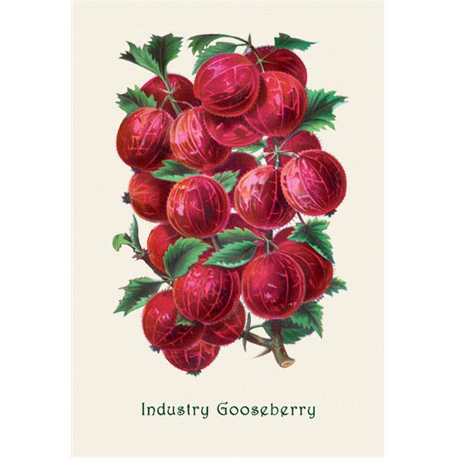 Buy Enlarge 0-587-04173-0P12x18 Industry Gooseberry- Paper Size P12x18
