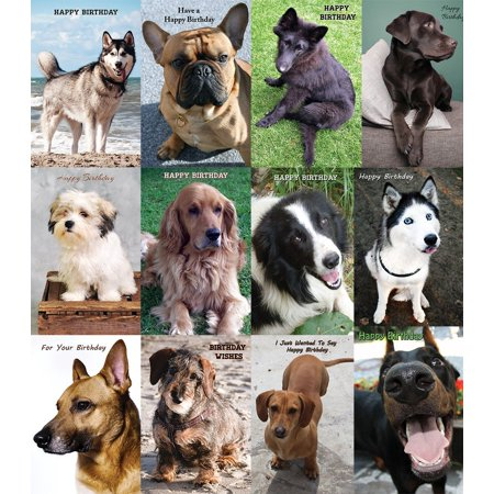 Birthday Cards Bulk (Assorted Birthday Dog Greeting Cards Bulk 12)