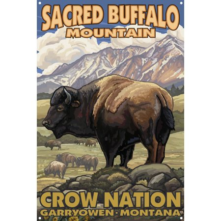 Sacred White Buffalo (Sacred Buffalo Mountain Montana Bison Herd Metal Art Print by Paul A. Lanquist (12