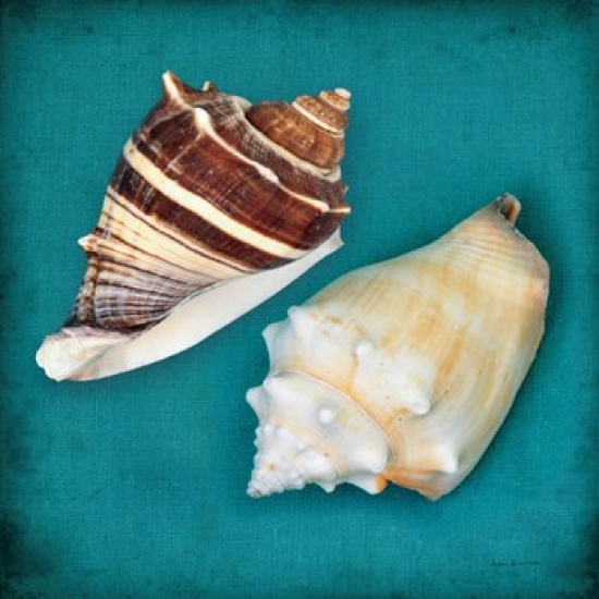 Two Shells III Poster Print by Diana Brennan (15 x 15)