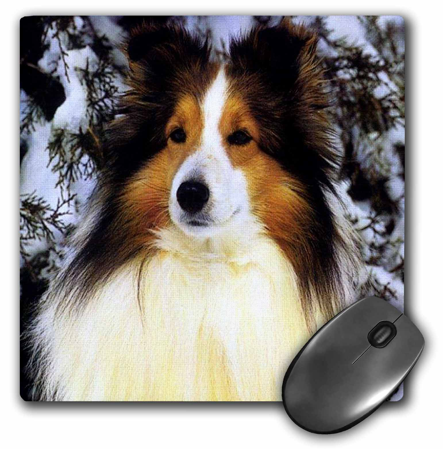 3dRose Sheltie, Mouse Pad, 8 by 8 inches
