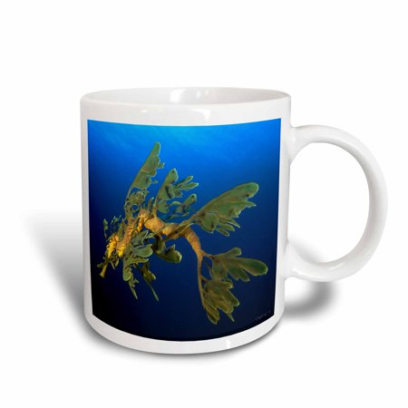 3dRose Leafy Sea Dragon - Phycodurus eques - in Esperance, Western Australia, Ceramic Mug, 11-ounce