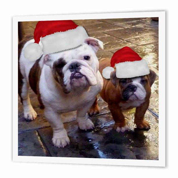 foto de 3dRose English Bulldog Christmas Wearing Santa Hats , Iron On Heat ...