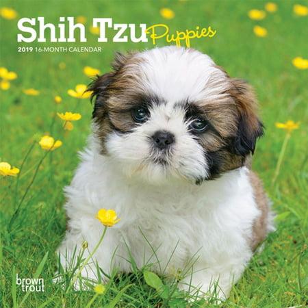 2019 Shih Tzu Puppies Mini Calendar, by