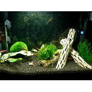 Cholla Wood (5-6 Inches) for aquarium shrimp, invertebrates and fish