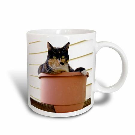3dRose Massachusetts, Greenfield. Calico cat - US22 SPE0547 - Susan Pease, Ceramic Mug, 15-ounce