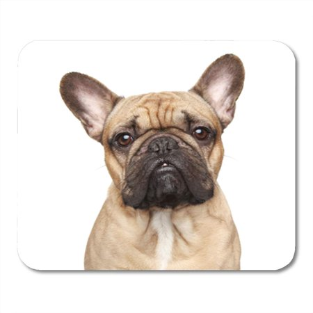 LADDKE Brown Dog French Bulldog Portrait Pug Ears White Funny Mousepad Mouse Pad Mouse Mat 9x10 (French Bulldog Ears)