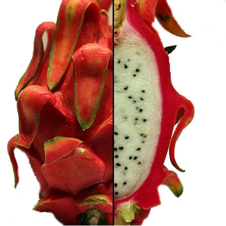 vietnamese jaina white dragon fruit hylocereus pitaya strawberry