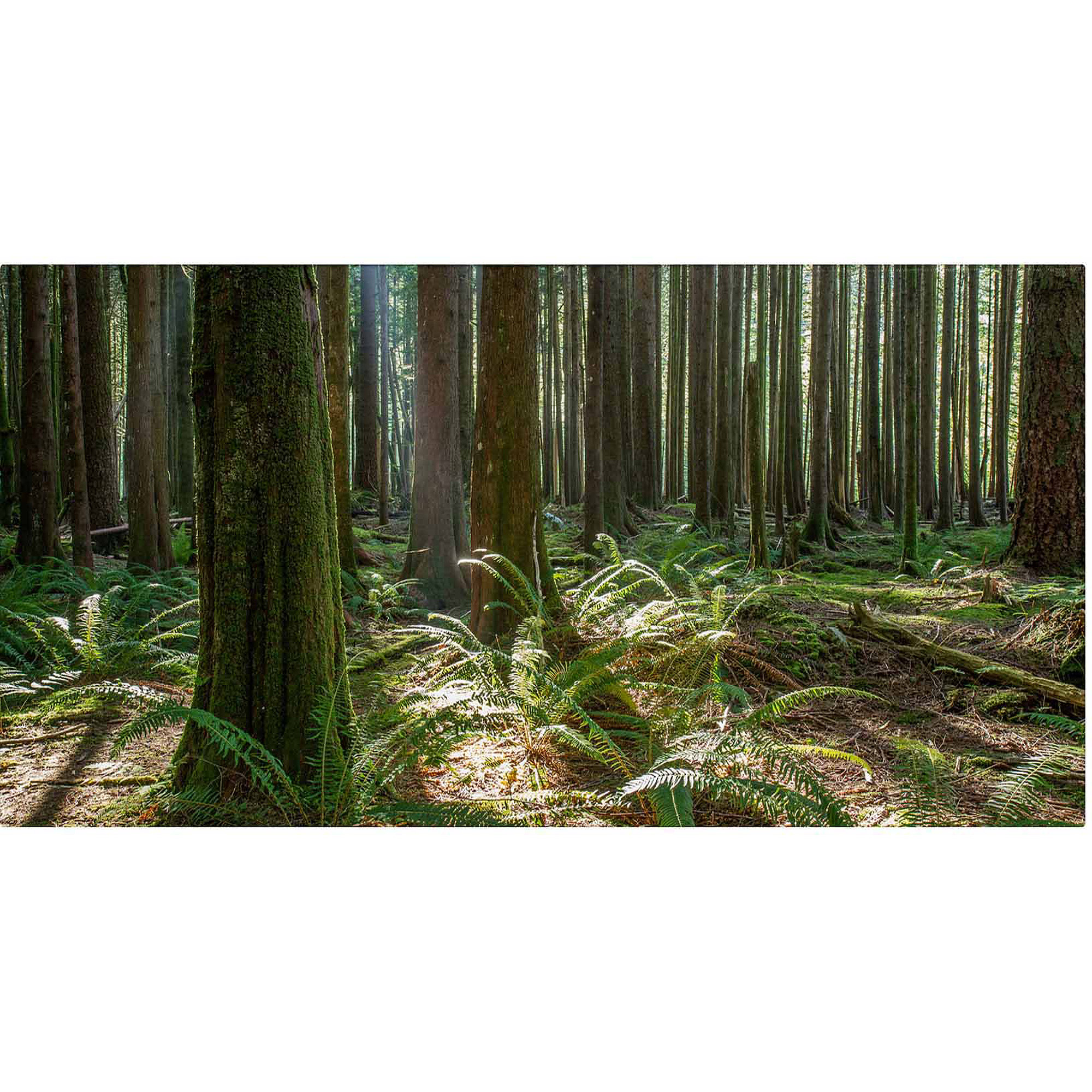 "Trademark Fine Art ""Forest"" Canvas Art by Pierre Leclerc"