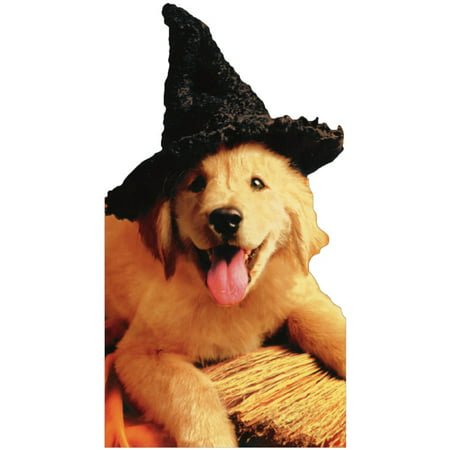 Avanti Press Pup With Witch Hat & Broom Funny Dog Halloween - Funny Halloween Witches Pics
