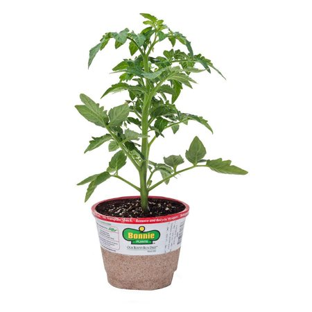 Bonnie Plants Bonnies Top Tomatoes Set of 4 Live Plants
