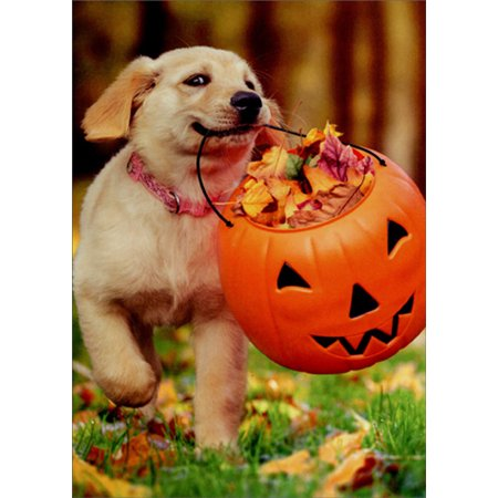 Avanti Press Puppy With Pumpkin Bucket Cute Dog Halloween Card (Halloween Puppy Games)