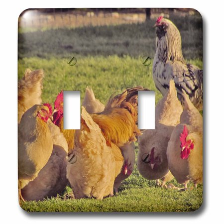 Rooster Switchplate (3dRose Red Hens and roosters - Double Toggle Switch )