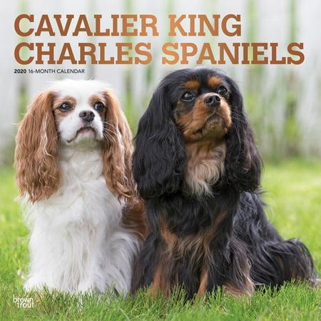 Cavalier King Charles Spaniels 2020 Square Foil