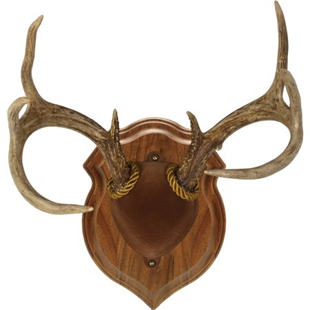 Walnut Hollow Country Deluxe Antler Display Kit in Solid Walnut for Whitetail Deer & Mule Deer Antlers