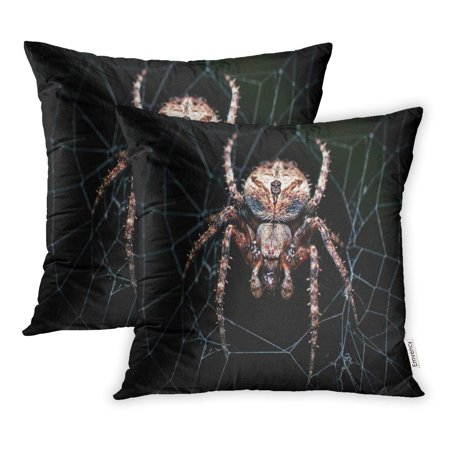ECCOT The Dark Colored Brown Sailor Spider Neoscona Nautica on Its This Species is Pillowcase Pillow Cover 20x20 inch Set of 2