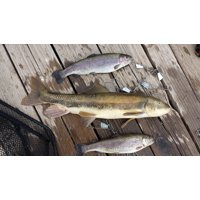 Canvas Print Fishing Trout Fish Hook Sucker Rainbow Trout Stretched Canvas 10 x 14