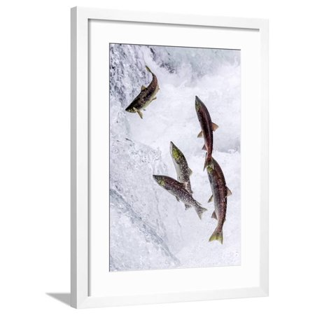 Upstream Framed - Swimming Upstream Framed Print Wall Art By Art Wolfe