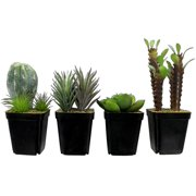 """Darice Succulent Cactus Potted 4""""-8"""" Astd"""