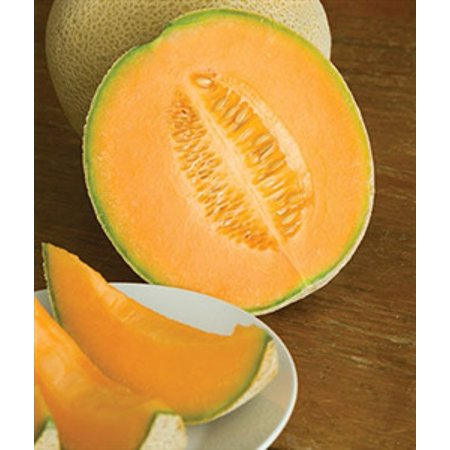 Cantaloupe Hale's Best Seed - 1 Packet (Hales Best Cantaloupe Seed)