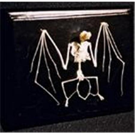 C & A Scientific - Premiere 51010 Real Bat Skeleton](Build A Skeleton)
