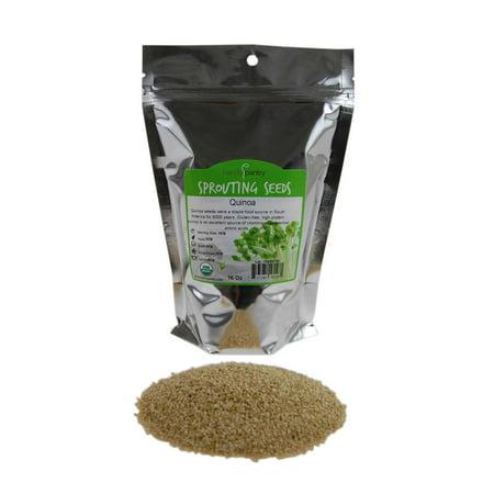 Organic Quinoa Seed- 1 Lb - Quinoa Grain Seeds - For Flour, Bread, Baking, Cooking, Food Storage, Cereal, More 1 Lb Beer Grains