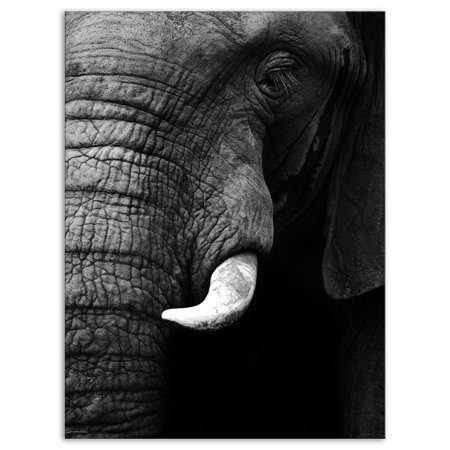 DESIGN ART Designart 'Elephant Head Close Up' Africa Animals Photography on Wrapped Canvas (African Elephant Head)