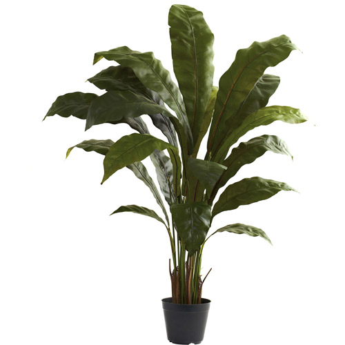 Nearly Natural 3-1/2' Birdsnest Plant