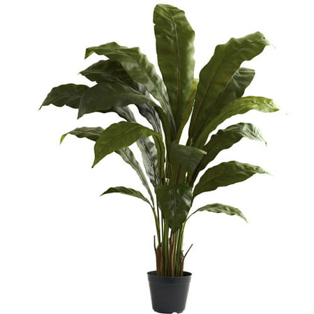 Nearly Natural 3-1/2' Birdsnest Plant (Tropical Indoor Plants)