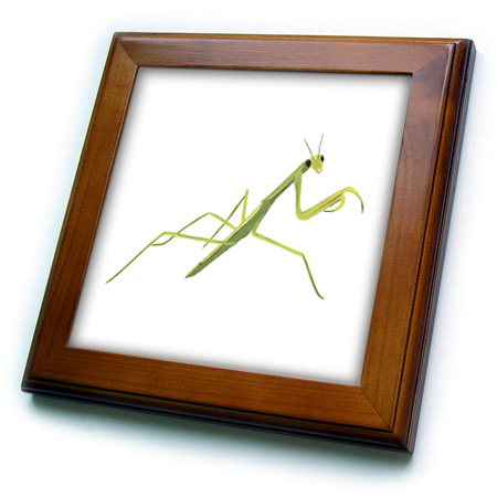3dRose Painting of a green praying mantis - Framed Tile, 6 by 6-inch