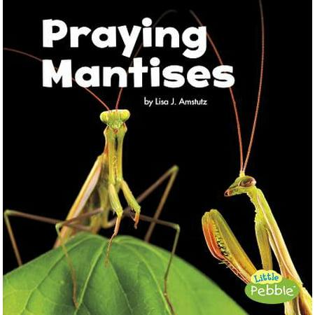 Praying Mantises (Praying Mantis Kit)