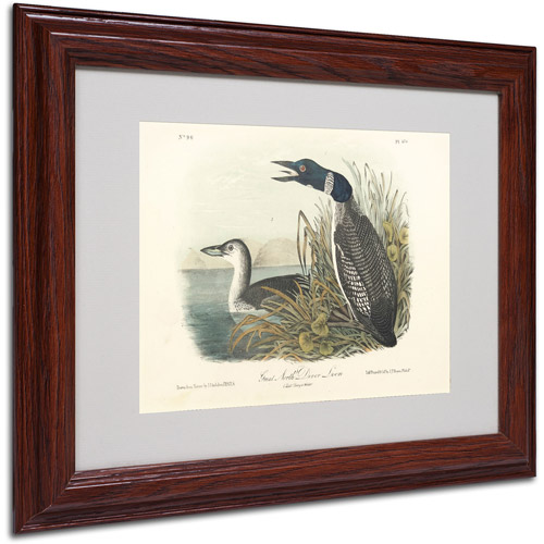 "Trademark Fine Art ""Great North Diver Loon"" Canvas Art by John James Audubon, Wood Frame"