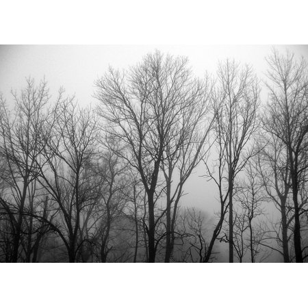 Framed Art for Your Wall Woods Fog Forest Nature Trees Landscape 10x13 Frame ()