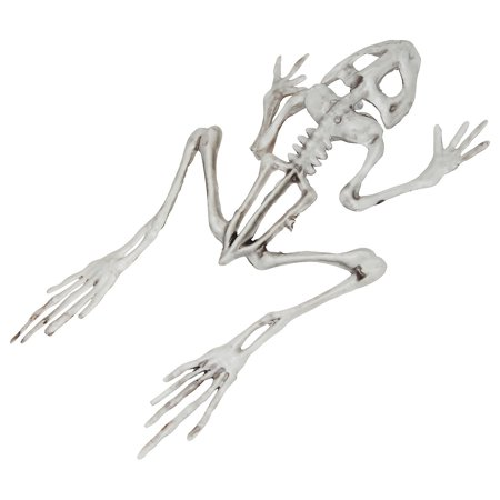 Fun Express - Frog Skeleton for Halloween - Party Decor - General Decor - Floor Clings - Halloween - 1 Piece
