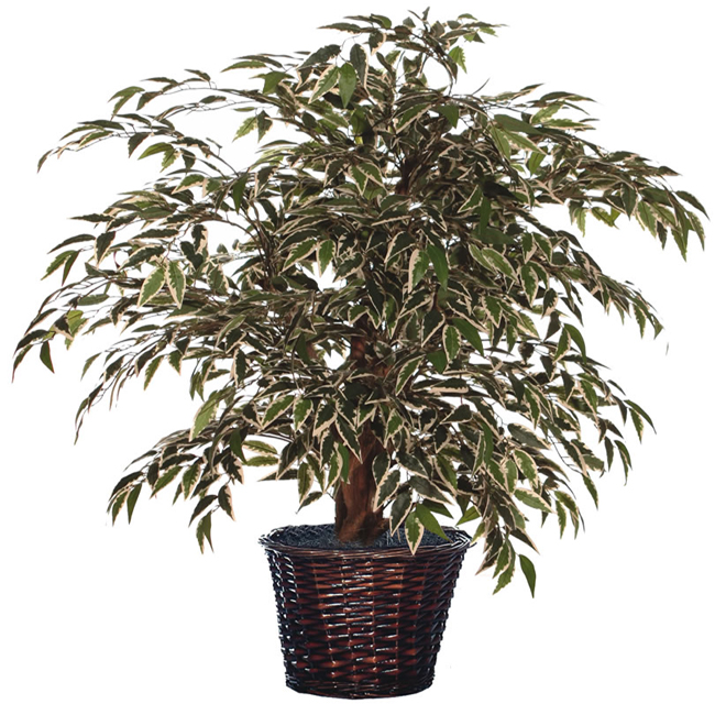 4' Artificial Potted Variegated Smilax Tree in Brown Pot