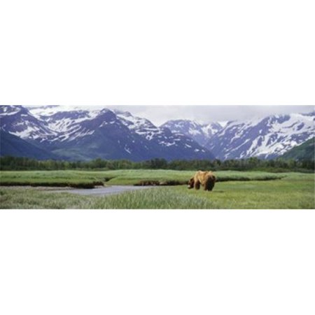 Panoramic Images PPI114198L Grizzly bear - Ursus arctos horribilis grazing in a field  Kukak Bay  Katmai National Park  Alaska  USA Poster Print by Panoramic Images - 36 x 12 - image 1 of 1