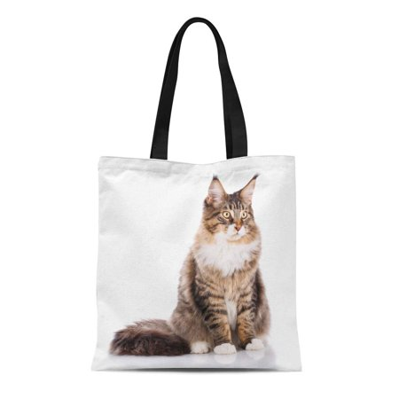 ASHLEIGH Canvas Tote Bag Portrait of Maine Coon Cat 6 Months Old Sitting Reusable Shoulder Grocery Shopping Bags