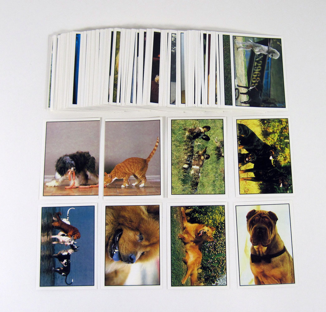 1997 Panini Modena Dogs & Cats Album Sticker Set (180) Nm/Mt Made in Italy
