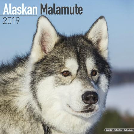 Alaskan Malamute Jewelry (Alaskan Malamute Calendar 2019 - Alaskan Malamute Dog Breed Calendar - Alaskan Malamutes Premium Wall Calendar)