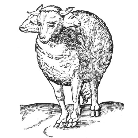 Tricephalic Lamb 16th Century Rolled Canvas Art - Science Source (18 x 24) One Lamb Roll