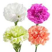 Natural Fresh Flowers - Assorted Carnations, 100 Stems