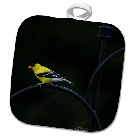3dRose Golden Finch in Spring Displaying Bright Colors - Pot Holder, 8 by - Pot Gold Color