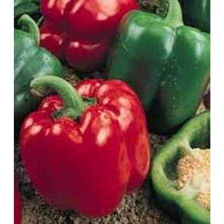 Yolo Wonder Pepper (Pepper Sweet Yolo Wonder BULK 2,000 Seeds Great Heirloom Vegetable )