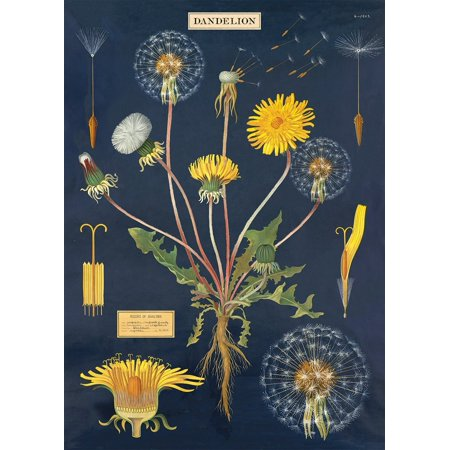 Cavallini & Co. Dandelion Chart Decorative Paper Sheet, Luxury Italian archival paper stock By Cavallini Co From USA