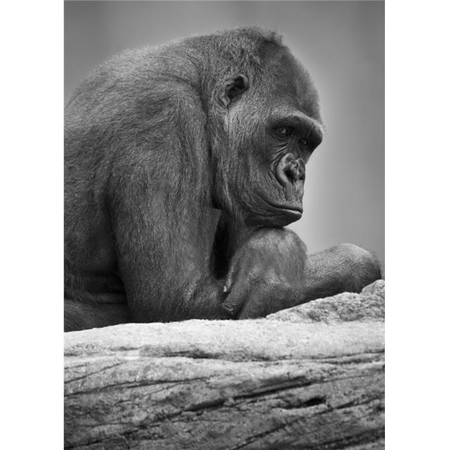 Gorilla Portrait Poster Print by Darren Greenwood, 22 x 32 - Large - image 1 of 1