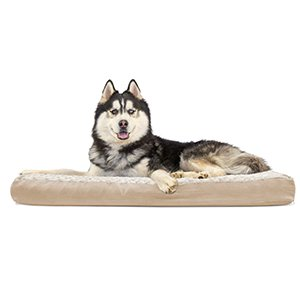 (FurHaven Pet Dog Bed | Deluxe Memory Foam Ultra Plush Mattress Pet Bed for Dogs & Cats, Cream, Jumbo)