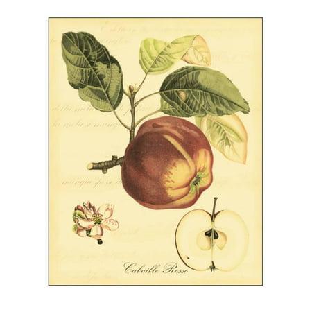 Petite Fruit (Petite Tuscan Fruits I Print Wall Art By Vision Studio )