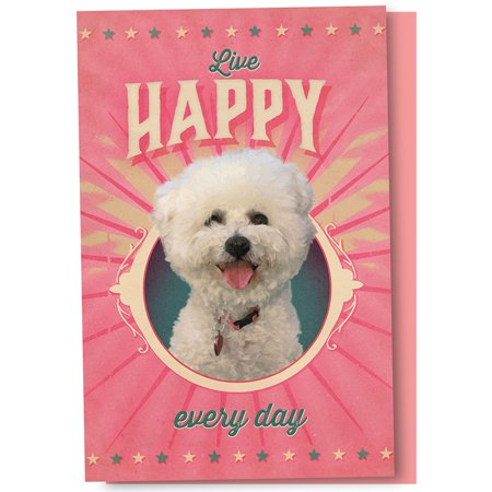 Tree-Free Greetings Poodle of Happiness Boxed ECOnotes Blank Note Cards-FS56162