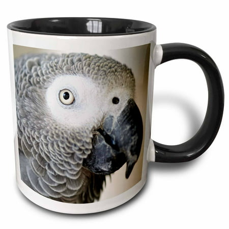 3dRose African Grey Parrot tropical bird - NA02 MFR0001 - MFR - Two Tone Black Mug, (Parrot Cup)