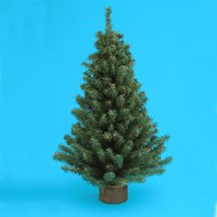 "Club Pack of 24 Miniature Pine Christmas Trees 24"" - Unlit"